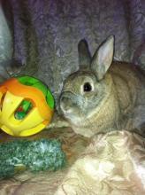 bunny rabbit adoptable girl